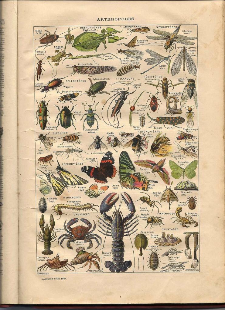 Arthropodes, début 20e siècle dans Revues anciennes arthropodes-larousse1